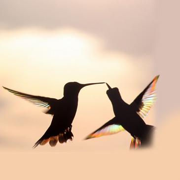 Couples Counseling Scottsdale AZ